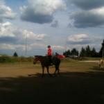 kone kraliky - upravene
